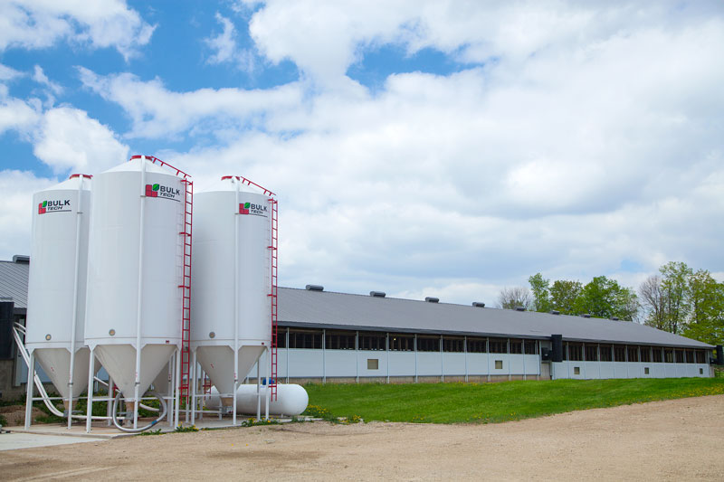 Pig barn with Bulktech feed bins
